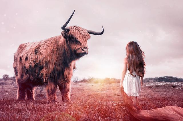 býk u dívky