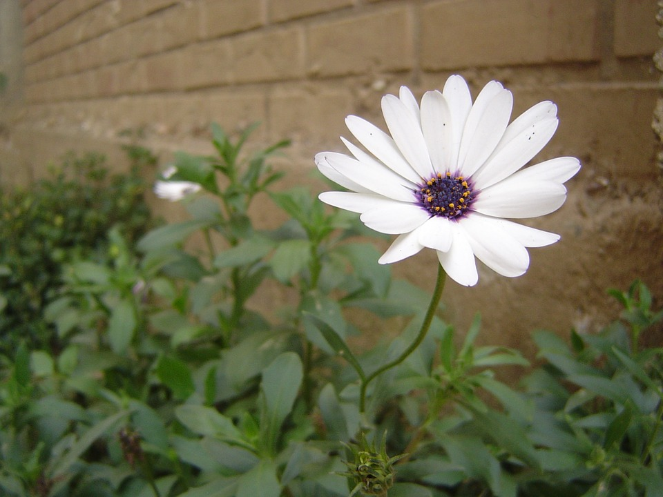 květina u zdi